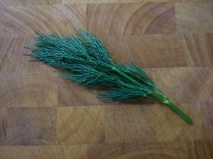 a little sprig of dill